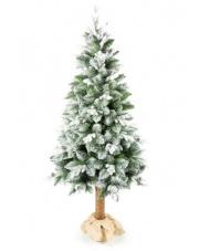 Piękna choinka Sosna Ośnieżona - 210 cm